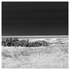 Laguna Madre in Black & White