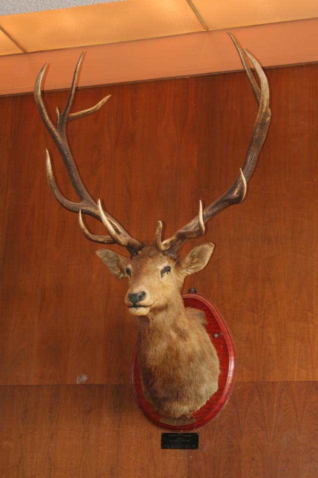 9349 Elk