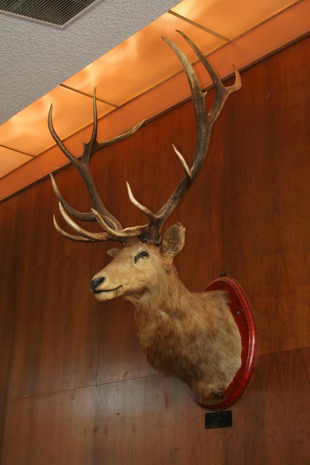 9352 Elk