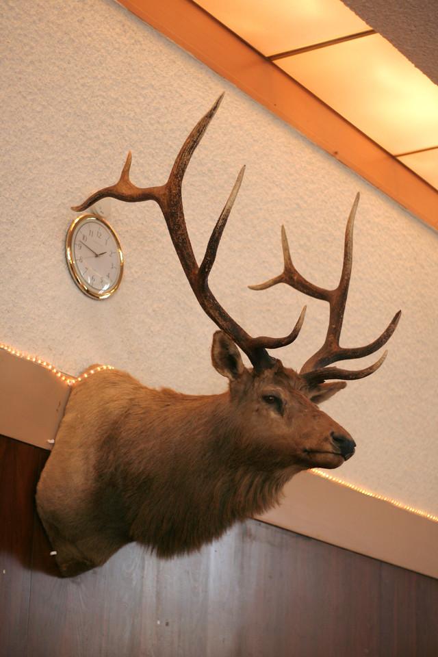9381 Elk