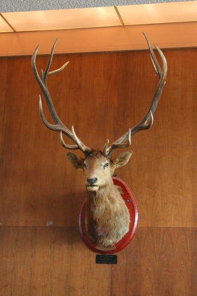 9348 Elk