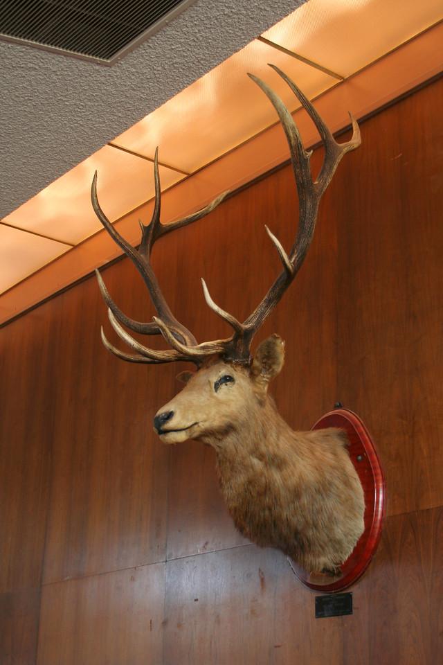 9351 Elk