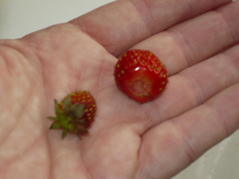 Our first strawberries