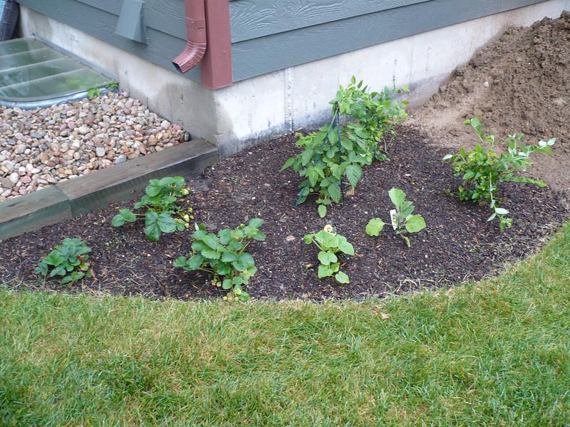 Side Garden is looking good too!