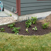 Side Garden - decided to add strawberries; black berry bush; blueberry bushes; and summer squash