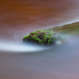 Moss in the River
