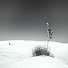 White Sands, NM<br /> © Sharon Thomas