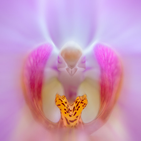 Orchid Spirit<br /> © Sharon Thomas