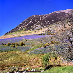 Grasmoor And The Rannerdale Bluebells