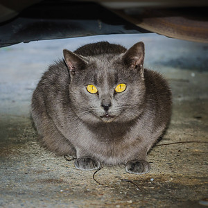 The Cat Under the Car