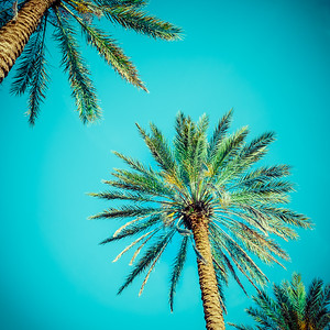 Palms in Turquoise