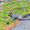 188-DJO2015SquirrelStudy