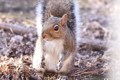 Squirrels-2018