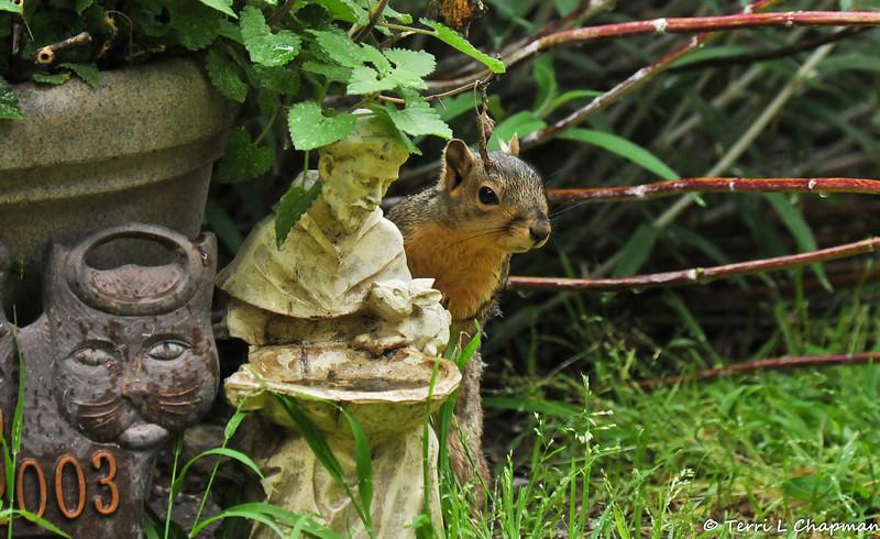 So cute! A female Fox Squirrel posing on my St. Francis statue.