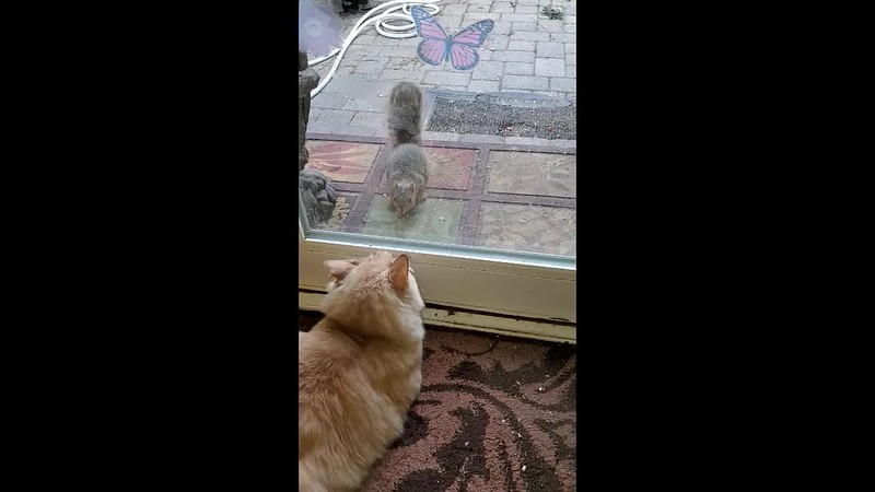 My cat, Tom, and a squirrel visitor at the backdoor!