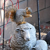 A Fox Squirrel having a snack on top of a lamb statue