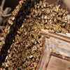 Wild Honey Bees in my garden