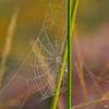Spiderweb on a cold Fall morning