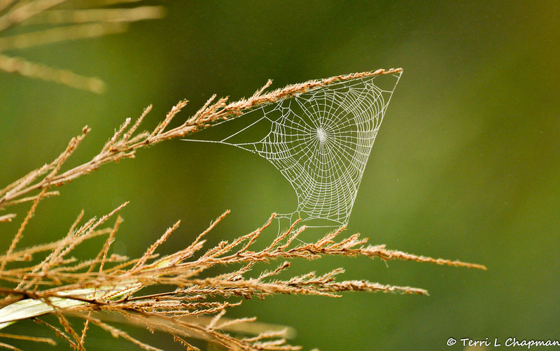A Spiderweb on a cold Fall morning