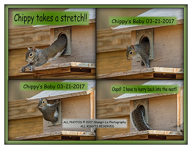 Chippy and her baby squirrel 03-21-2017 web (50)