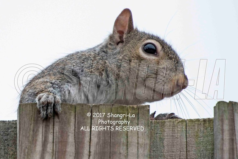 Chippy - Squirrel 03-07-2017_7501345 Or this side wm cm