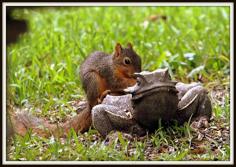 Baby Squirrel's First Time at the Feeder