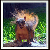 Talkative Squirrel