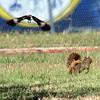 Mockingbird vs Squirrel Part 5