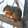 Furry Thief