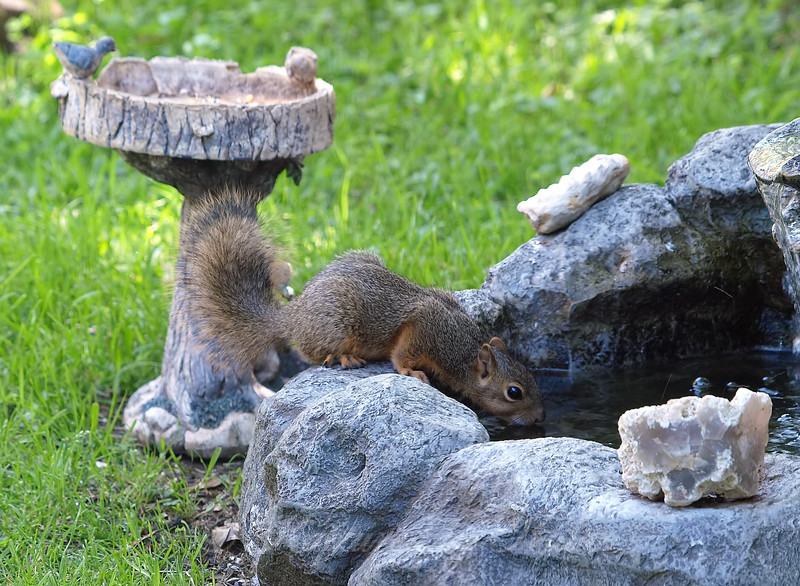 Thirsty Squirrel View 1