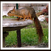 Squirrel at Birdbath