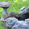Thirsty Squirrel View 2