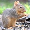 Unsuspecting Squirrel