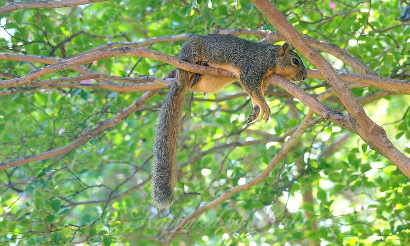 Squirrel Dad Bod
