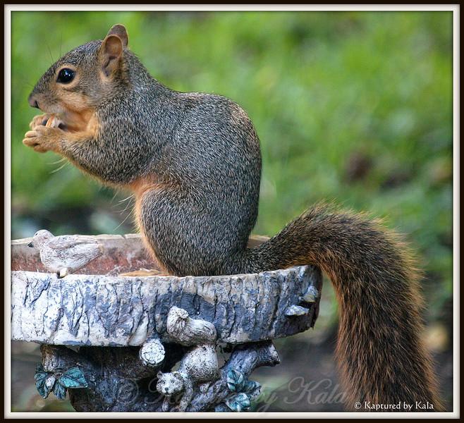 Squirrel Eating Breadcrust