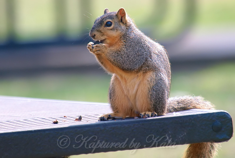 Apparently The Picnic Tables Are For Squirrels