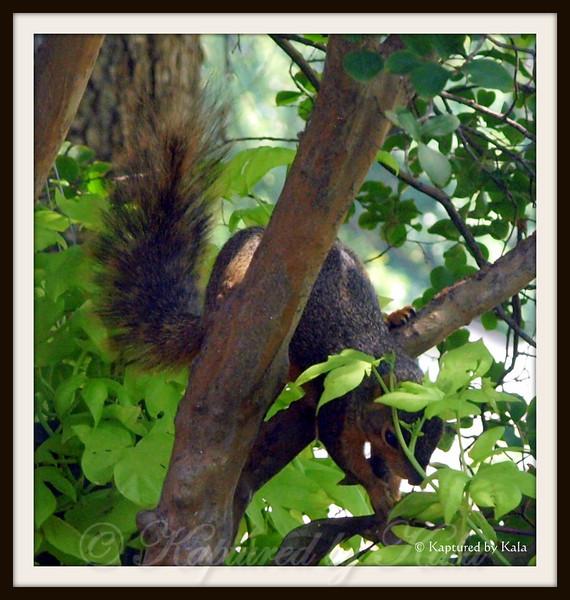 Squirrel Eating Sweet Potato Vine