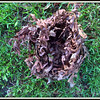 Squirrel's Nest