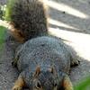 Nawww, I Don't Spoil My Squirrels