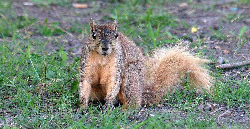 Friendly Sunset Bay Squirrel