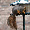 For a Moment There I Thought it Was One Squirrel With 2 Tails