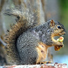 A Mother Squirrel Ventures Out After a Rainstorm to Eat
