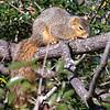 Sleepy Squirrel