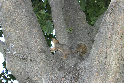 Oh look squirrel..... Ops sorry I got distracted....