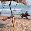 Man with calf passes tourists in hammocks, Tangalla, Sri Lanka