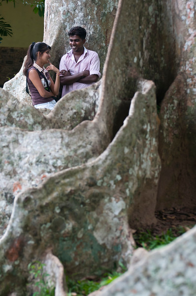 Young couple meet within the roots of a Giant Java Almond tree at Peradeniya Botanical Gardens, Kandy, Sri Lanka