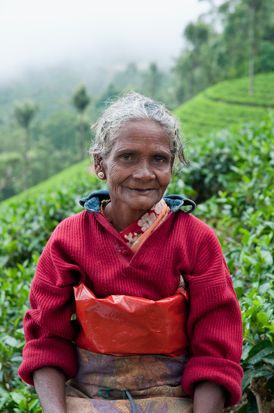 Tea picker, Haputale, Sri Lanka