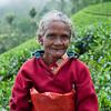 Tea picker, Haputale, Sri Lanka