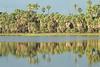 Reflections -  Nature Park Lake