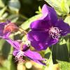 Bovitiya flowers
